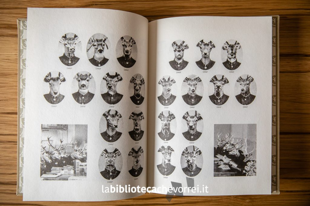 La classe dei cervi. Pagine interne del libro The Animal School Yearbook di Kim Yu. ©somebooks 2012.