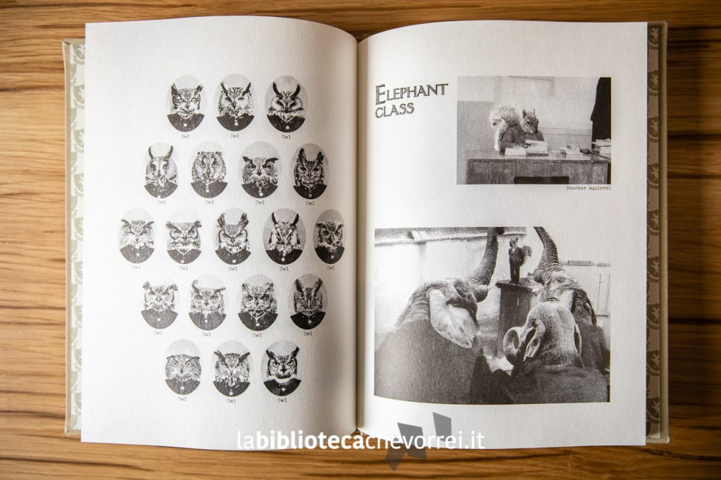 La classe dei gufi e quella degli elefanti nel libro The Animal School Yearbook di Kim Yu. ©somebooks 2012.