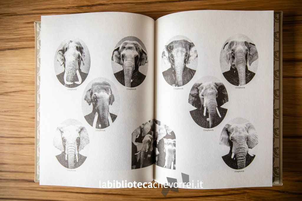 La classe degli elefanti nel libro The Animal School Yearbook di Kim Yu. ©somebooks 2012.